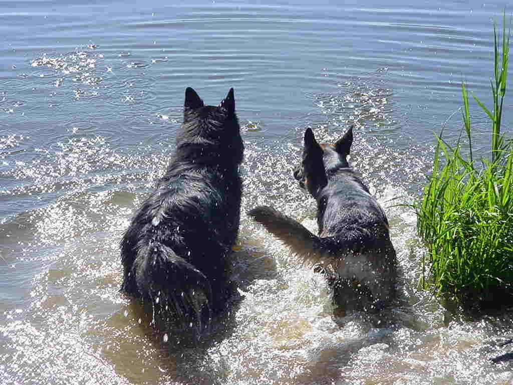 Lord und Fenja beim Wasserplanschen